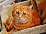 Purrfect Cat Minding