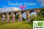 Viaduct Violets